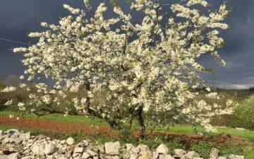 Il Miele del Sindaco 2017 è quello di Marasca del Friuli Venezia Giulia